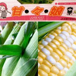 野菜17061-min