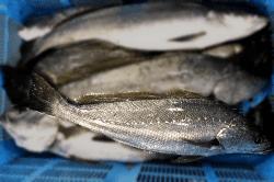 魚1706162-min