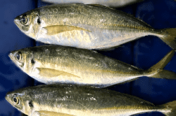 魚1706203-min