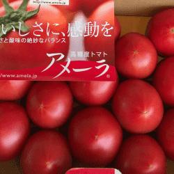 野菜1707283-min