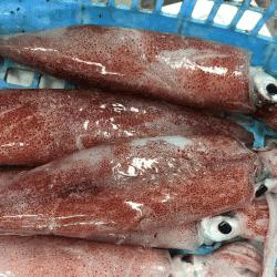 魚と畑170818-min
