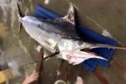 魚1708211-min