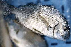 魚1709051-min