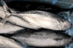 魚1709052-min