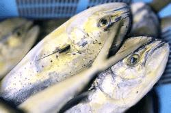魚1709054-min