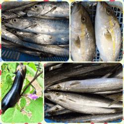 魚と畑170906-min