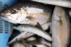 魚1709061-min