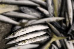 魚1709062-min