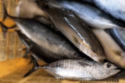魚1709112-min