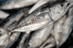 魚1709133-min