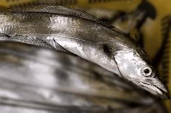 魚1709134-min
