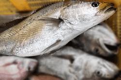 魚1709154-min
