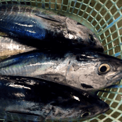 魚と畑170915-min