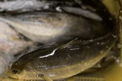 魚1709192-min