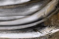 魚1709194-min