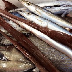 魚と畑170920-min