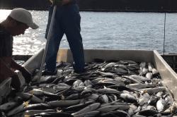 魚1709214-i