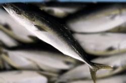 魚1709274-min
