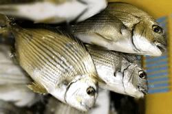 魚1709281-min