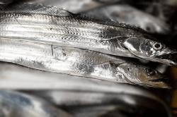 魚1709282-min