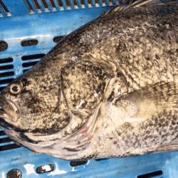 魚と畑171003-min