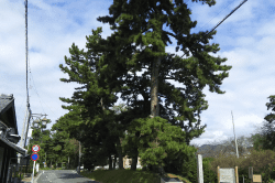 御油の松並木-min