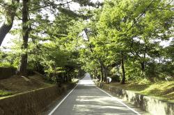 藤川の松並木-min