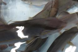 魚1710131-min