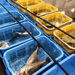 魚と畑171013-min