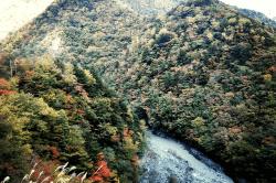 井川1710311-min