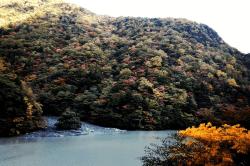 井川1710312-min