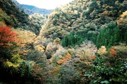 井川1710313-min