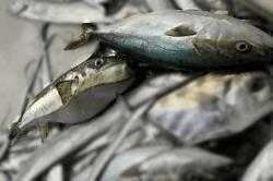 魚1711101-min