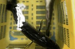 魚1711102-min