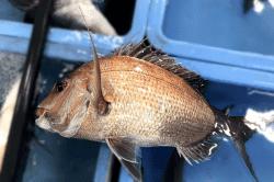 魚1711133-min