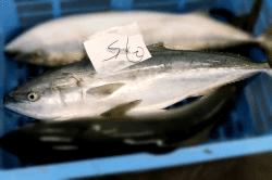 魚1711145-min