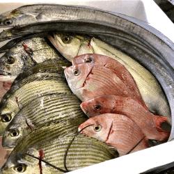 魚と畑171115-min