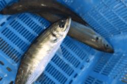 魚1711161-min
