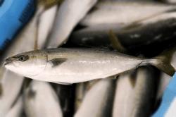魚1711163-min