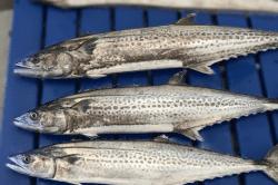 魚1711165-min