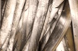 魚1711164-min