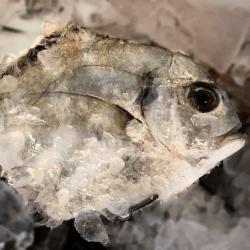 魚と畑171117-min