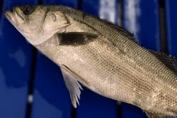 魚1711203-min
