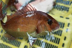 魚1711212-min