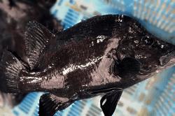 魚1711213-min