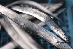 魚1711215-min