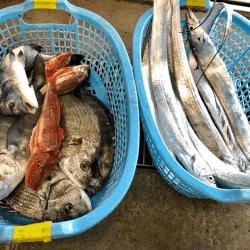 魚と畑171122-min