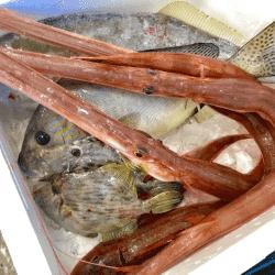 魚と畑171124-min