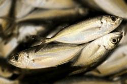 魚1711281-min