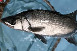 魚1711284-min
